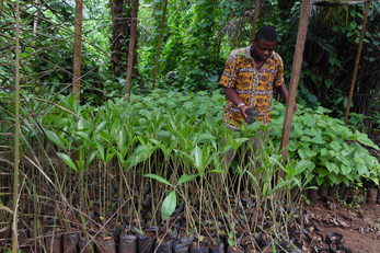 Integrated Community Tree Nursery for School Gardens in Ikata Village