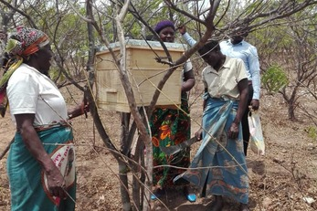 Women-Led Honey Value Chains in Mbalame